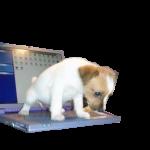 Качественный ремонт ноутбуков Черкассы